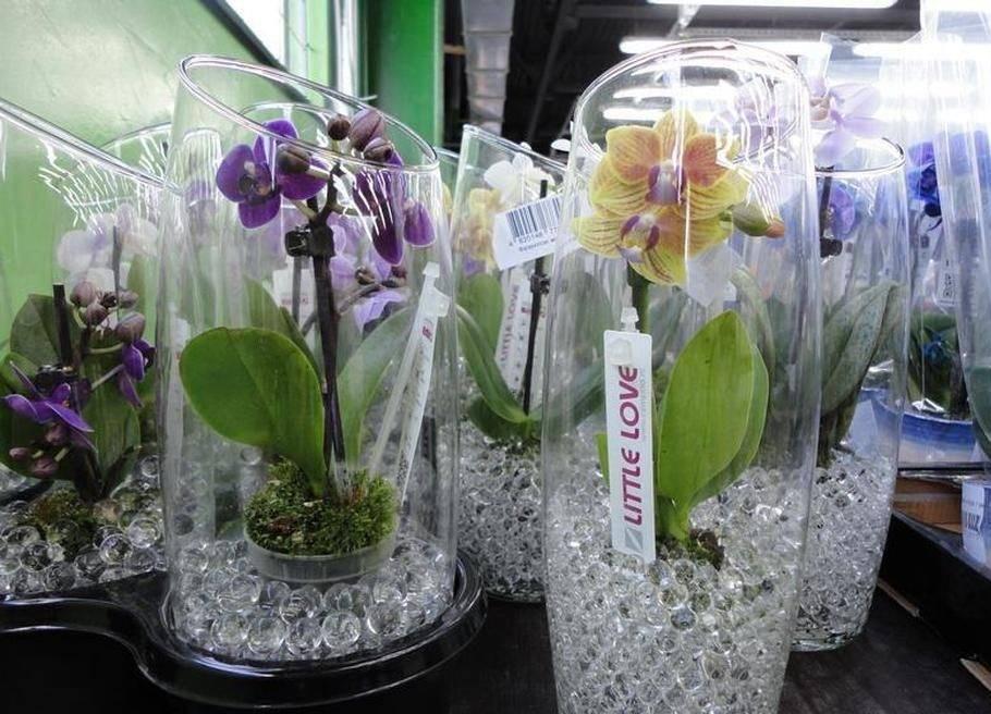 Уход за орхидеями в стеклянных вазах: как выращивать в домашних условиях, поливать и подкармливать цветок, фото и видео от специалистов