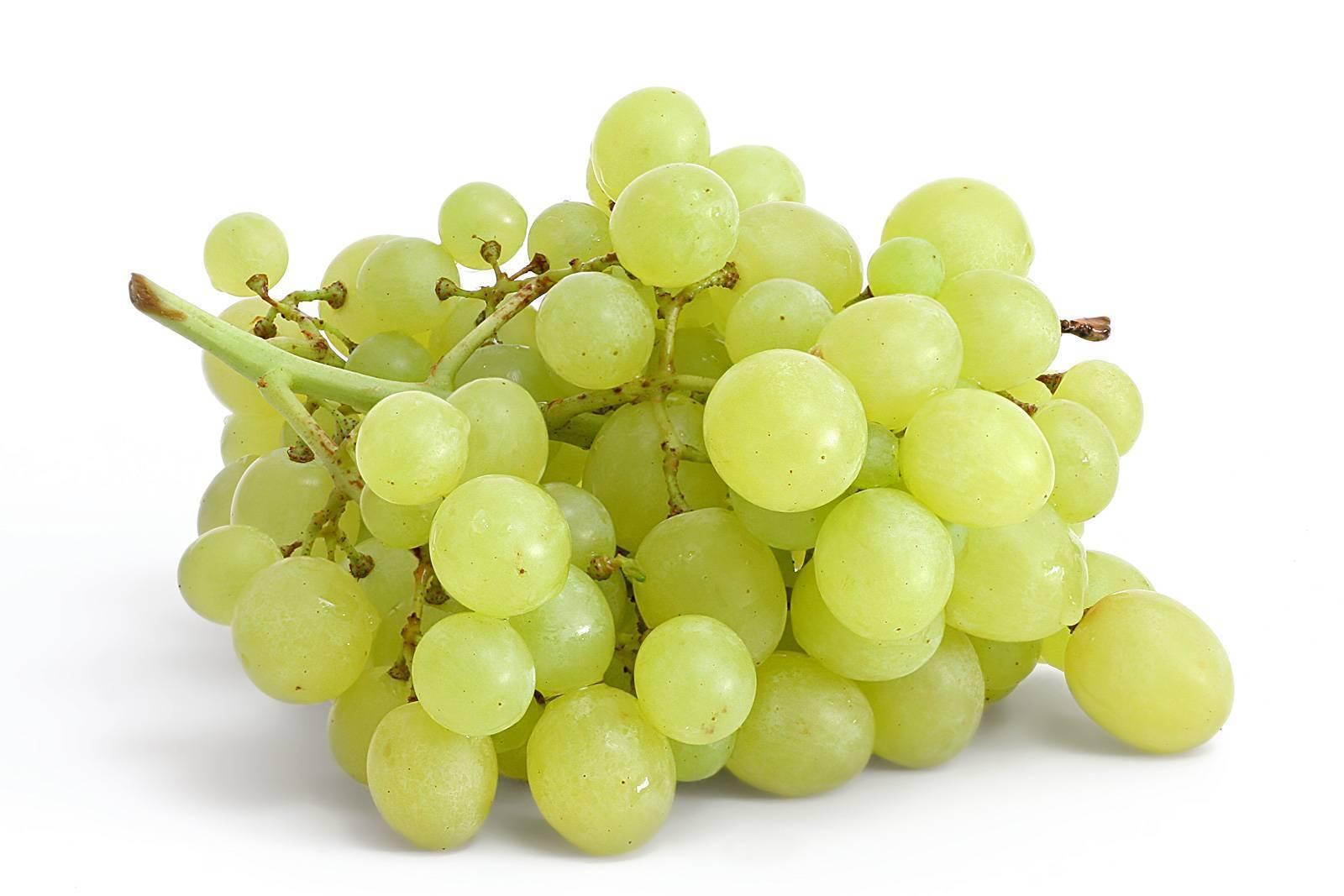 Польза винограда — 10 фактов о его влиянии на организм человека, состав и противопоказания