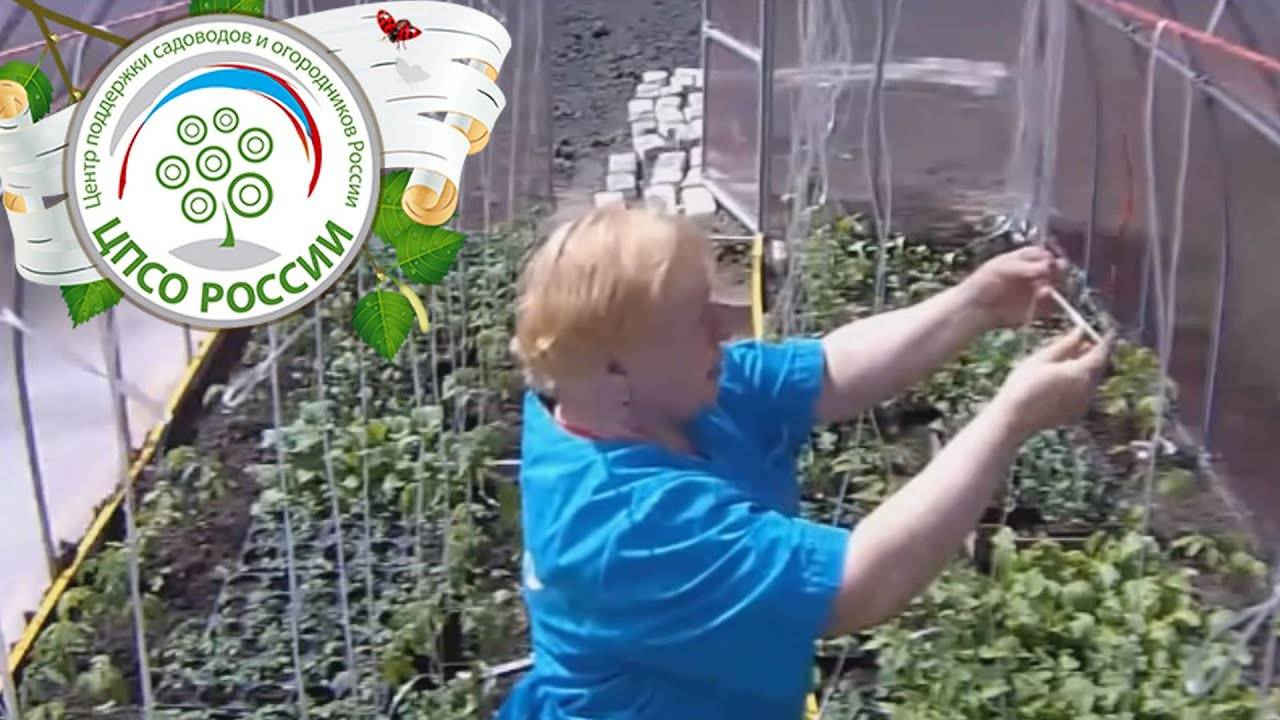 Как в теплице подвязать помидоры: варианты и способы подвязки, приспособления и материалы для подвязывания помидор в теплице из поликарбоната, крепления русский фермер