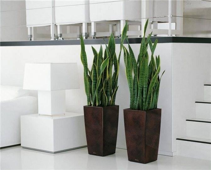 Правильно выбираем растения для офиса