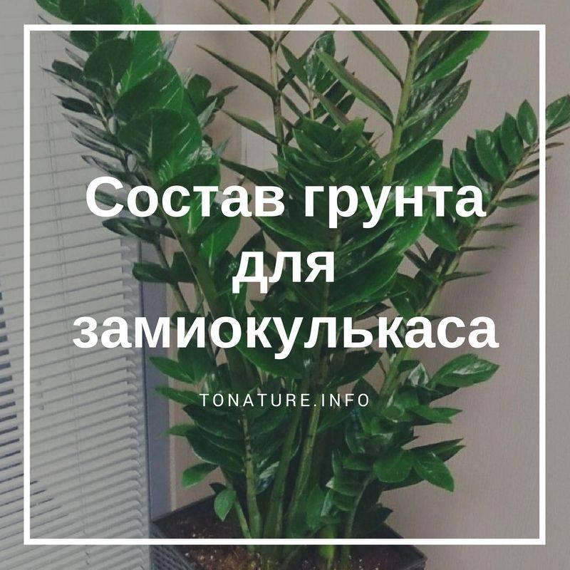 Какая земля нужна для денежного дерева? какая почва подходит для посадки толстянки в домашних условиях? как выбрать готовый грунт?