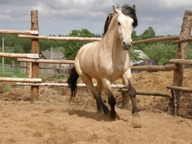 Продолжительность жизни лошадей