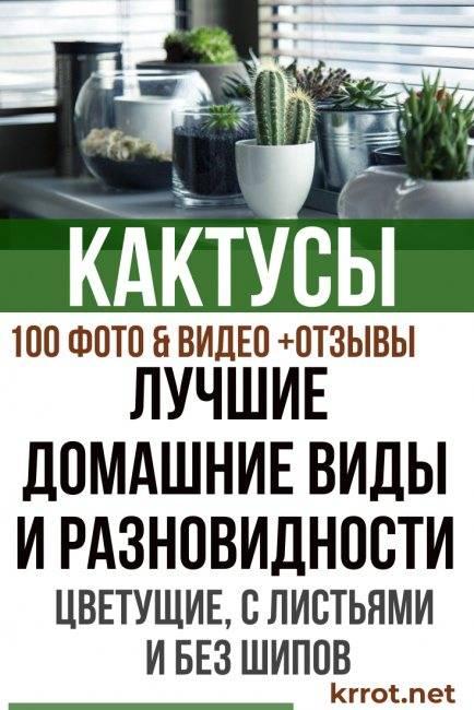 Домашние кактусы: виды, фото, названия и основные характеристики