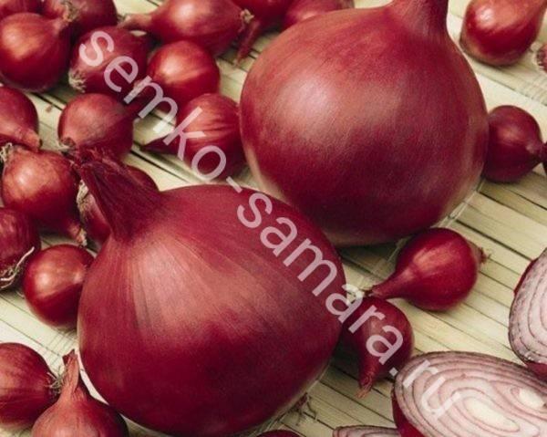 Сорта красного лука репчатого: как их названия, растут ли в подмосковье, и описание лучших салатных и иных видов фиолетового (сиреневого) цвета для посадки