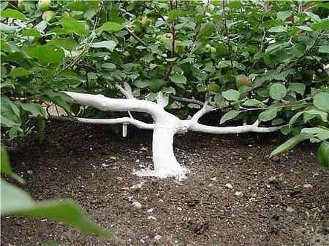 Яблоня садовая: посадка и обрезка саженцев дерева весной