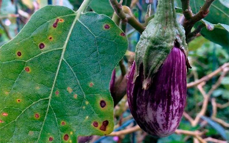 Почему загнивает рассада и как этого избежать: 10 советов от бывалого огородника