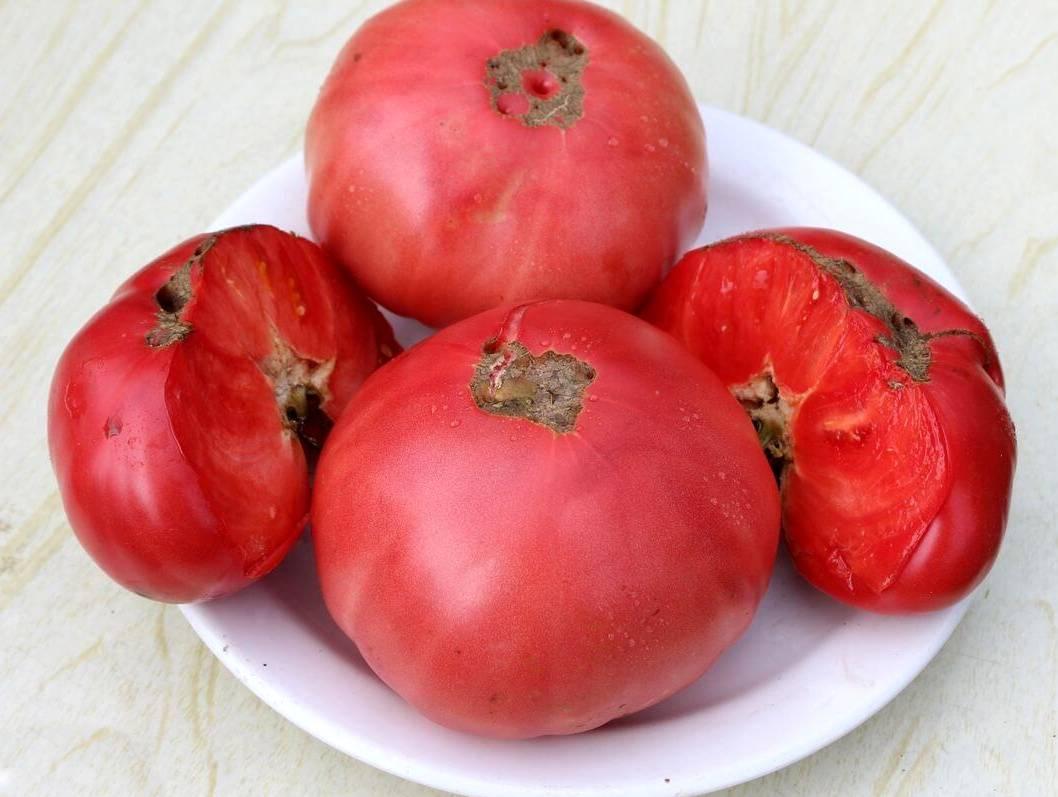 Томат бабушкин секрет: характеристика урожайности и описание сорта