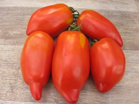 Выращивание перцевидных томатов
