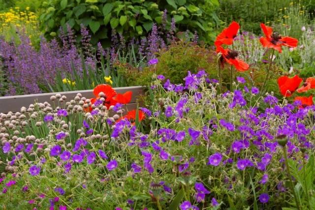 100 лучших идей: многолетние цветы для дачи и сада на фото