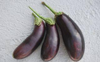 Описание и характеристики баклажана буржуй, урожайность, выращивание и уход