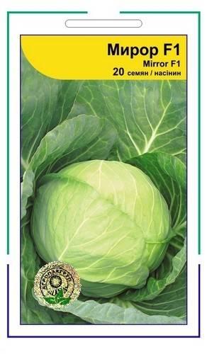 Капуста пандион f1: характеристика гибрида и отзывы о вкусовых качествах, описание урожайности сорта и фото