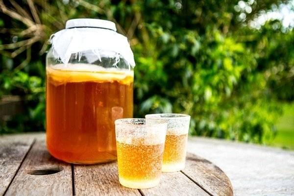 Чайный гриб: лечебные и полезные свойства, противопоказания, вред для организма, отзывы, как пить, уход