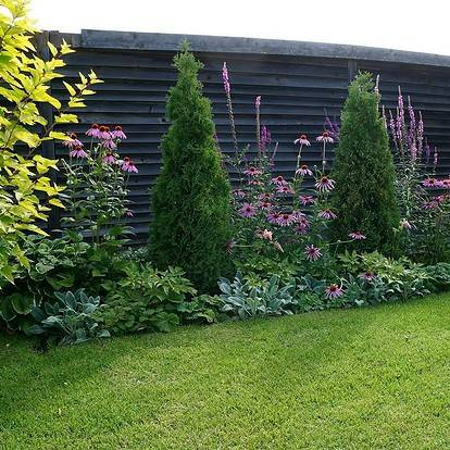 Какие декоративные кустарники посадить вдоль забора - всё о воротах и заборе