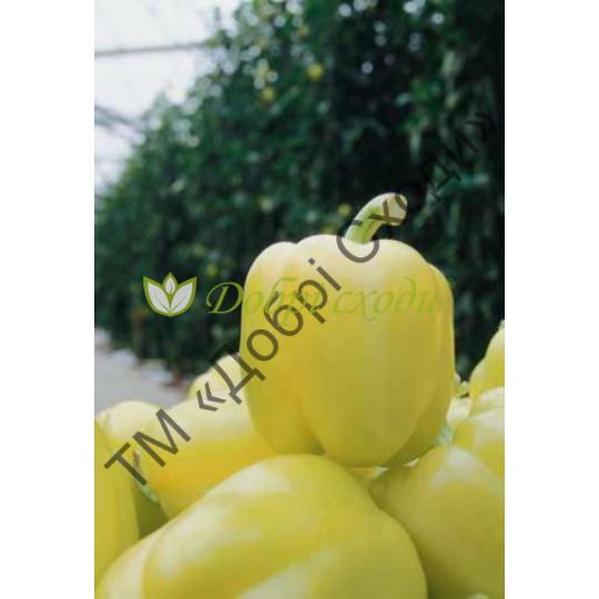 Характеристика сорта перцев блонди f1 - журнал садовода ryazanameli.ru