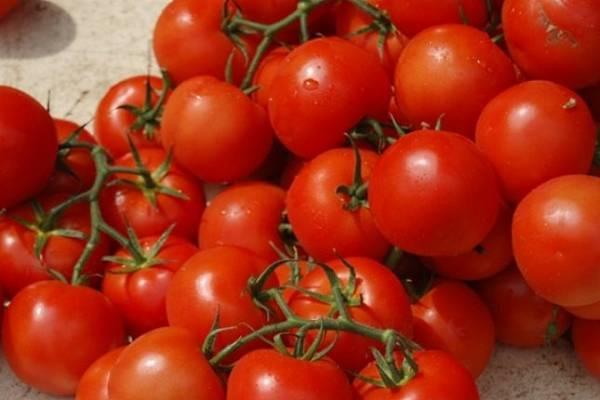 Томат верлиока: описание, отзывы, фото, урожайность | tomatland.ru