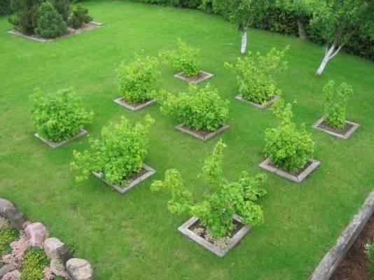 Как спланировать сад на небольшом участке?