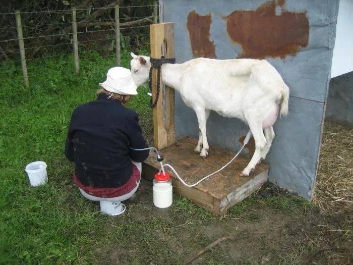 Доильные аппараты для коз: виды и тонкости выбора