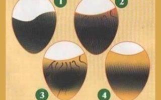 Инкубация индюшиных яиц: стадии развития, таблица режимов и сроков выращивания в домашних условиях, а также какая температура необходима и как избежать ошибок? selo.guru — интернет портал о сельском хозяйстве