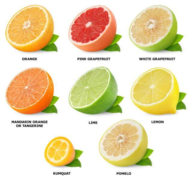 Что известно о помело: полезные свойства и вред фрукта
