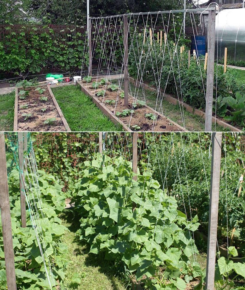 Выращивание огурцов на шпалере в открытом грунте — советы и рекомендации