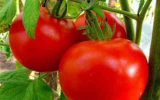 Сорта томатов для открытого грунта устойчивые к фитофторе | огородовед
