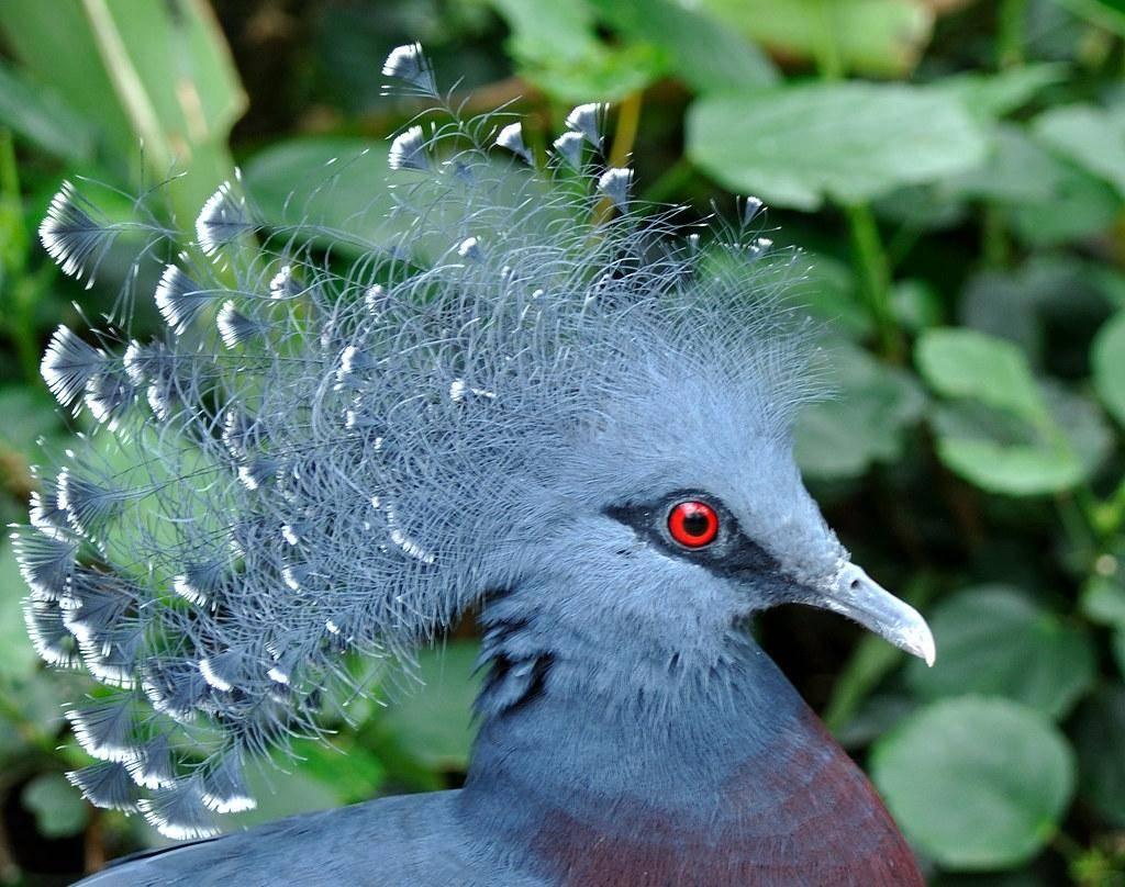 Голубь птица. описание, особенности, виды, образ жизни и среда обитания голубя | живность.ру