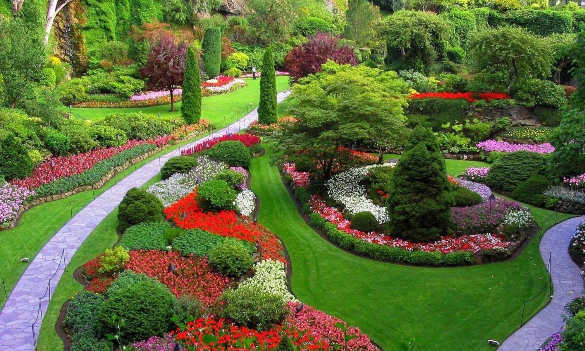 4 способа, как вырастить крепкую рассаду капусты в домашних условиях