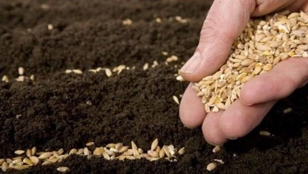 Когда и как сажать морковь весной 2019 года семенами в открытый грунт: коррективы огородных работ в зависимости от регионов и климата | спутниковые технологии
