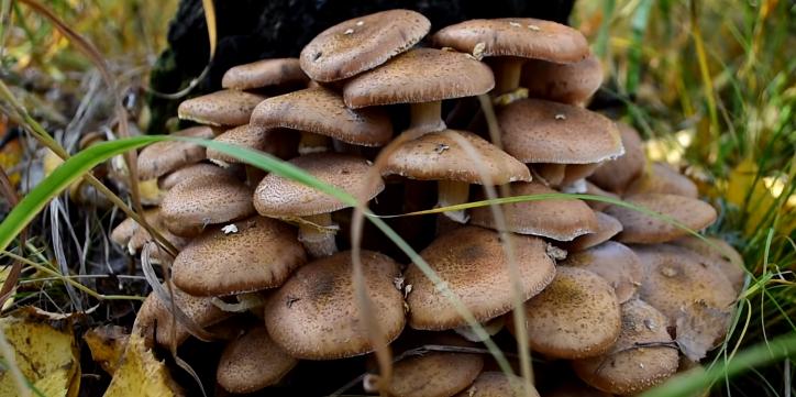 Рост белых грибов — сколько они растут и при какой температуре