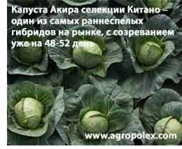 Капуста чудо ультрараннее f1: описание сорта, отзывы, урожайность