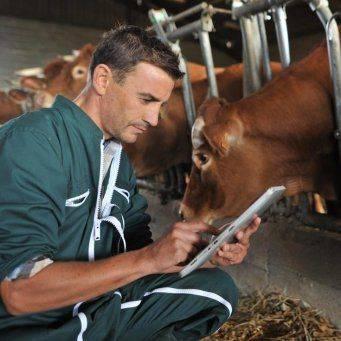 Лечение коров - 100 фото болезней, варианты и особенности их развития