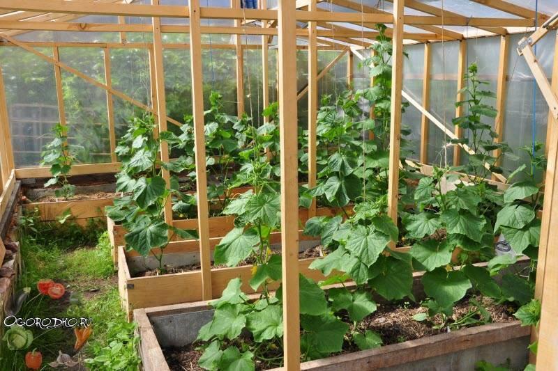 Как подвязать помидоры в теплице - лучшие способы и варианты