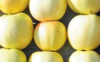 Яблоня осенняя радость — любимица садоводов