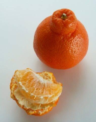Как называется гибрид мандарина и грейпфрута