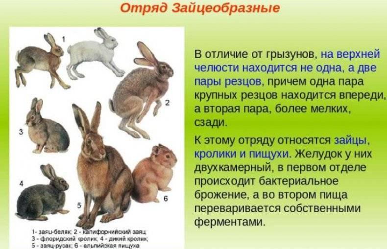 Самые интересные факты о кроликах | vivareit