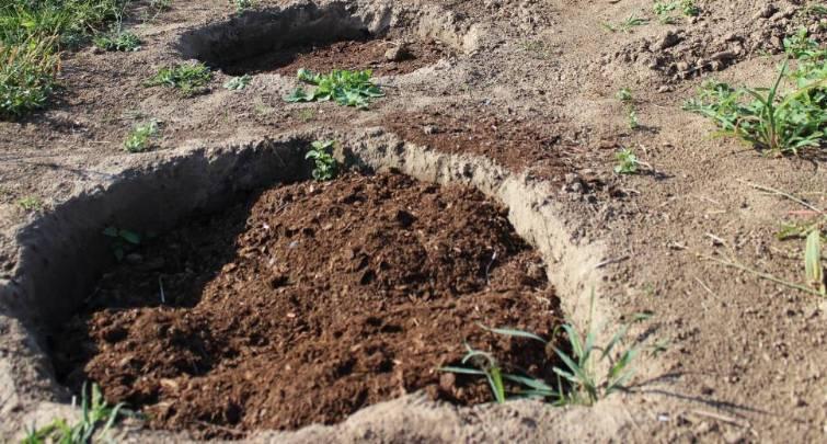 Выращивание картофеля китайским методом: способ посадки картошки по технологии поднебесной, а также как ухаживать за овощем и избежать ошибок?
