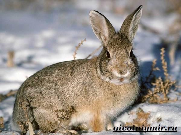 Заяц: описание внешнего вида, основные признаки и характеристики