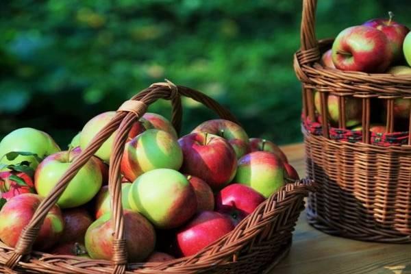 Характеристики и описание яблони сорта баяна, регионы выращивания и отзывы садоводов