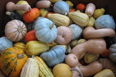 Посадка и выращивание арбузов в подмосковье в открытом грунте и в теплице, выбор сорта, видео