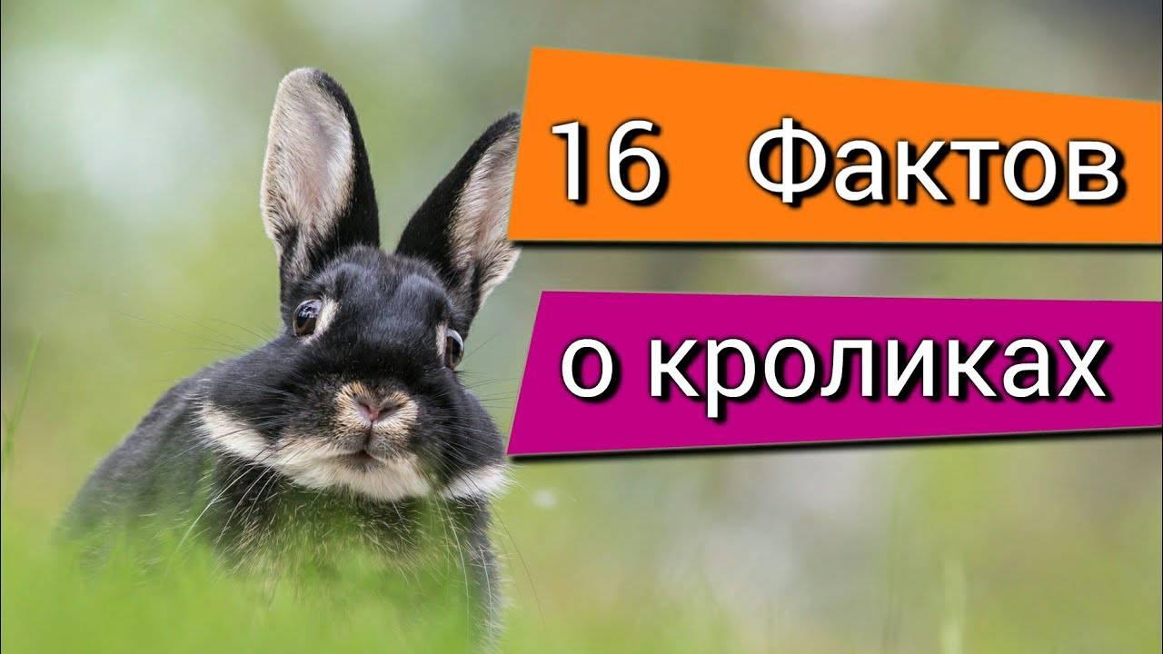 Топ-10 интересных фактов о кроликах