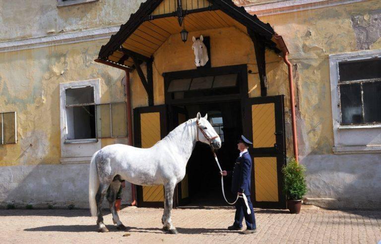 Лошадь породы битюг.история и характеристика породы | мои лошадки