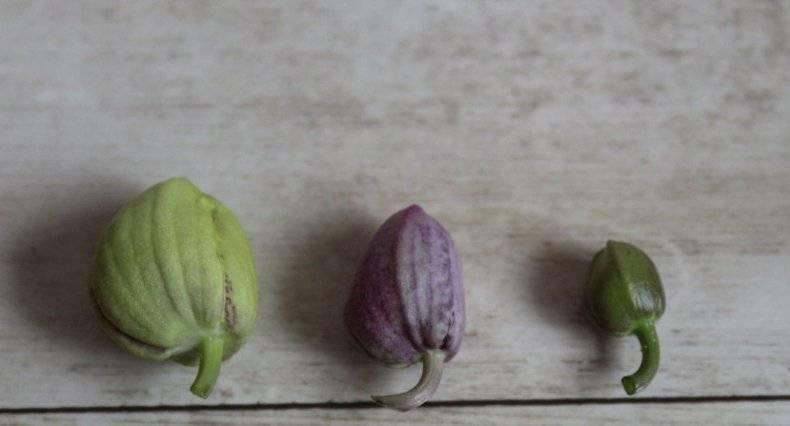 Причины, почему у орхидеи опадают цветы и что делать