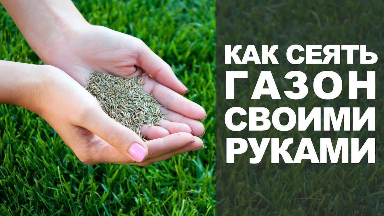 Посадка газонной травы на даче осенью: подготовка участка, посадка семян, уход