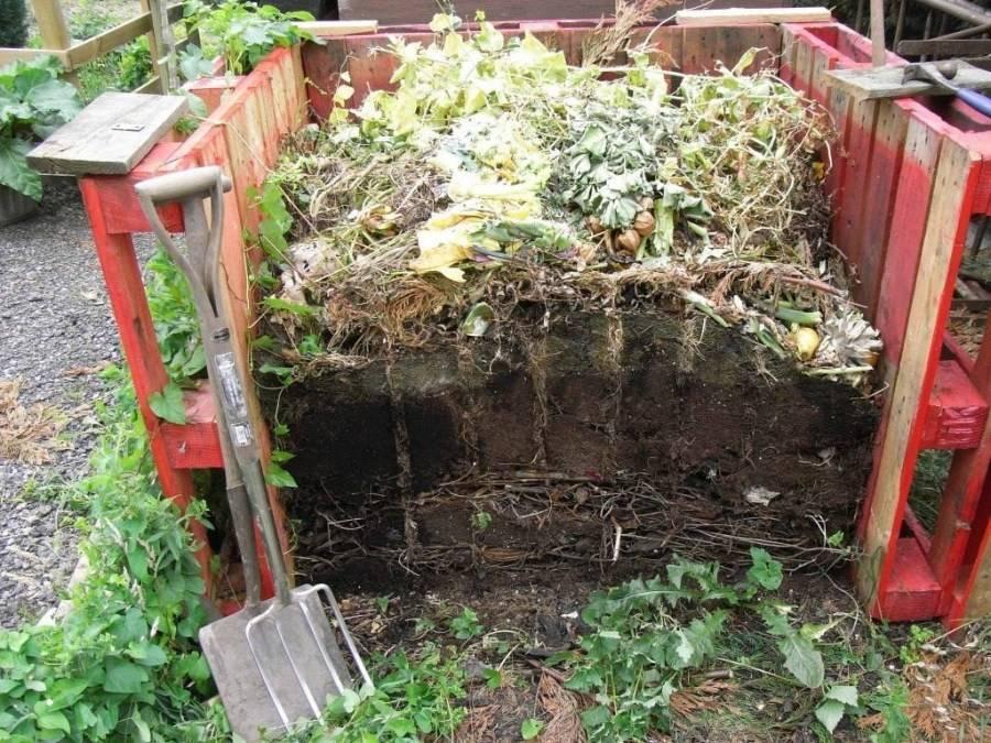 Что происходит с отходами в яме? как сделать чудо с яичной скорлупой или компостные метаморфозы
