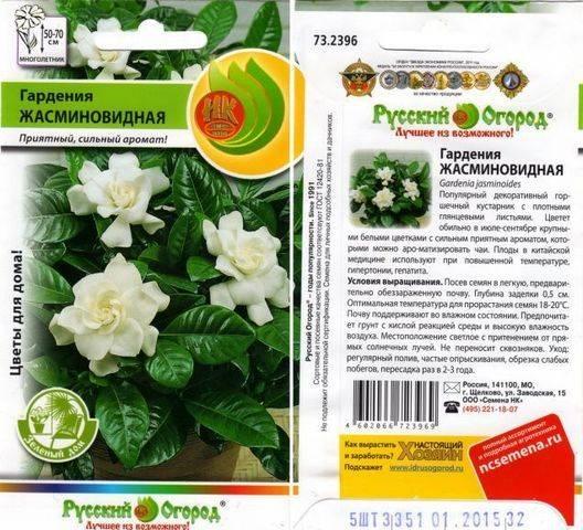 Выращивание жасминовидной гардении из семян в домашних условиях