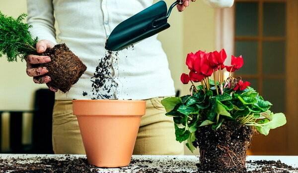 Уход за комнатными растениями: фото, видео, ошибки которые легко избежать