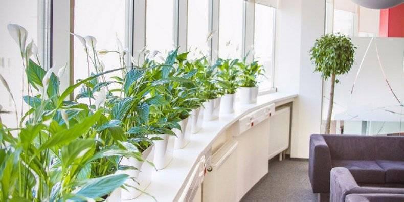 Топ-9 растений для офиса, лучшие растения для офиса