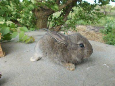 Какие витамины для кроликов подходят лучше?