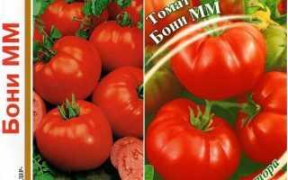 Томат цифомандра: характеристика и описание сорта, урожайность с фото