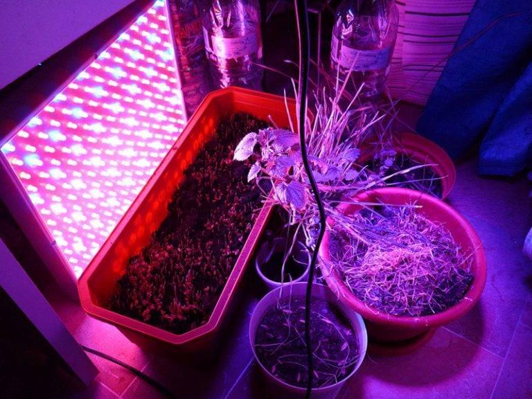 Фитолампа для растений своими руками из светодиодной ленты — как сделать и для чего нужна, какие фитолампы для рассады лучше